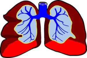 respiratory system facts