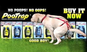 dog-poop-contraction