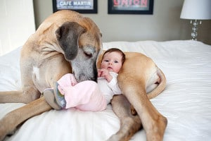 why dogs are better than cats 41