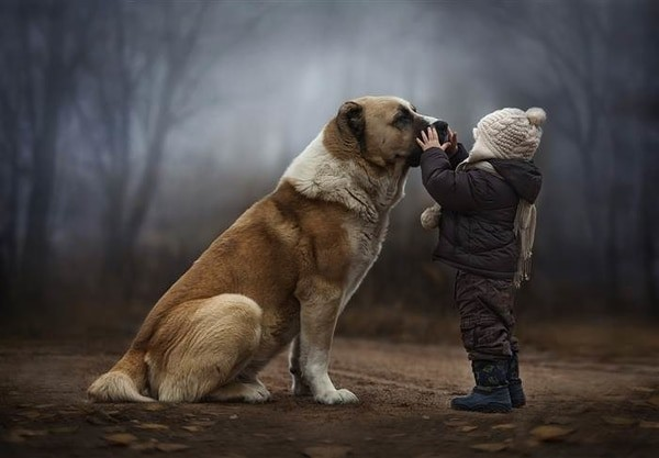 best pets for kids - dogs