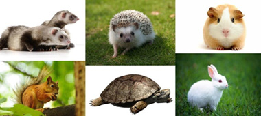 easiest pets to take care of